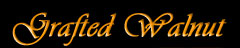 Grafted Walnut Wood